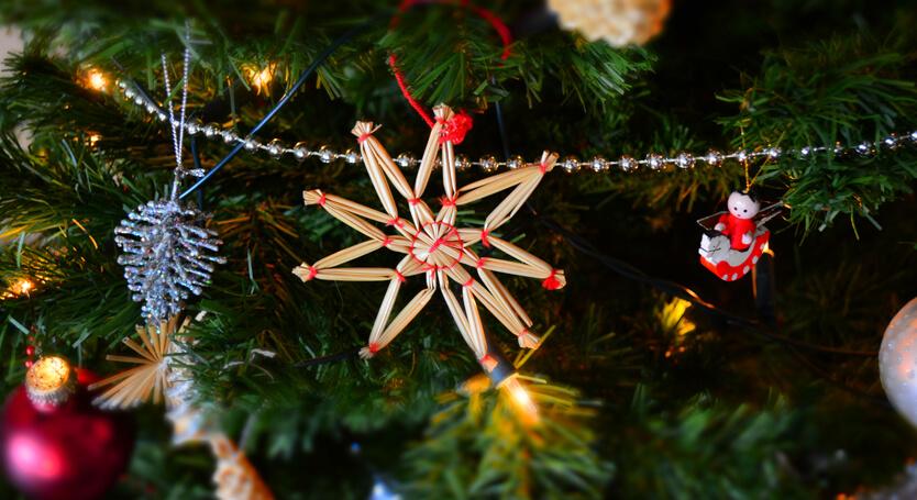 Buy a Christmas Tree